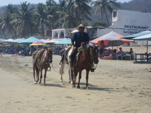 Man Walking Horses Manzanillo